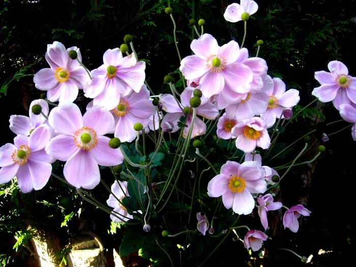 2011 - Fleurs
