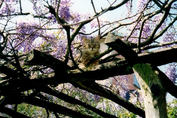 Glycine et chat
