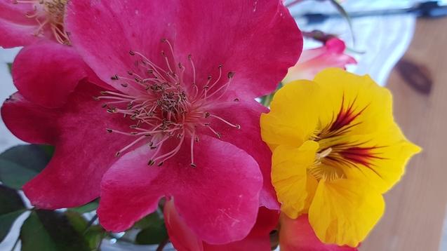 les Orchidées d'ANNE .L  vues à Vergèze (30)