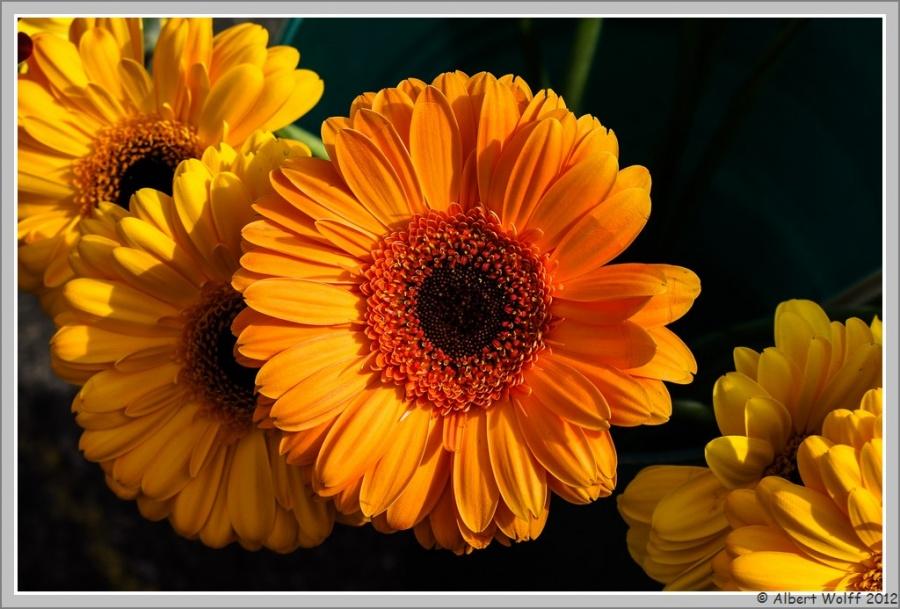 Photos florales...