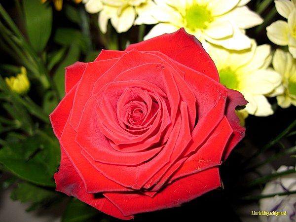 Fleurs-1284.JPG