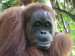 Le parc du Gunung Leuser à Sumatra