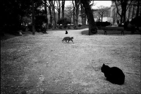 Des chats du monde -1
