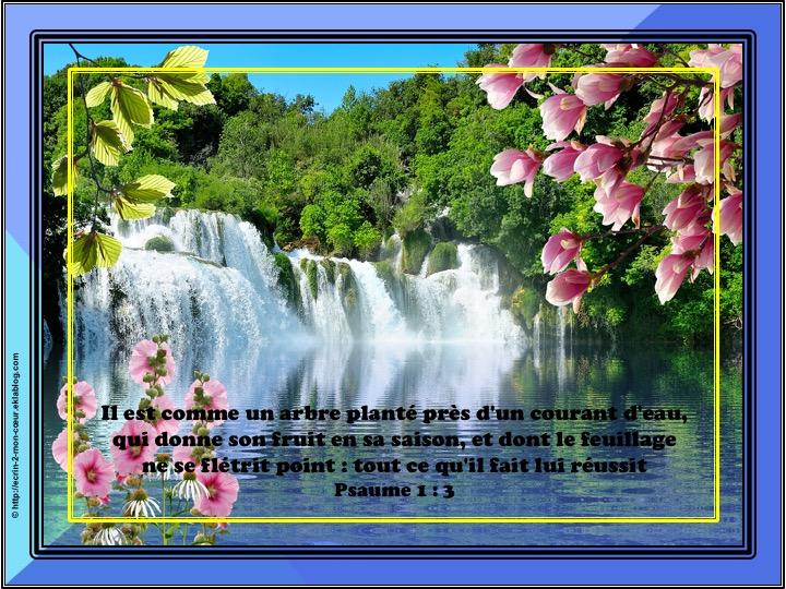 Il est comme un arbre planté près d'un courant d'eau - Psaumes 1 : 3