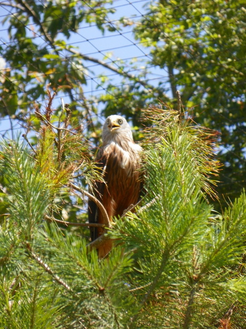 Le Parc des Oiseaux à Villars-les-Dombes ( 6 )