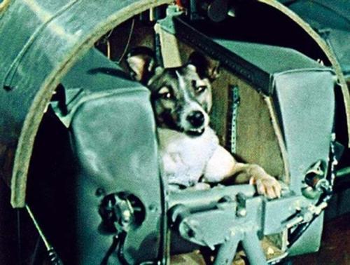 Laïka, première chienne dans l'espace