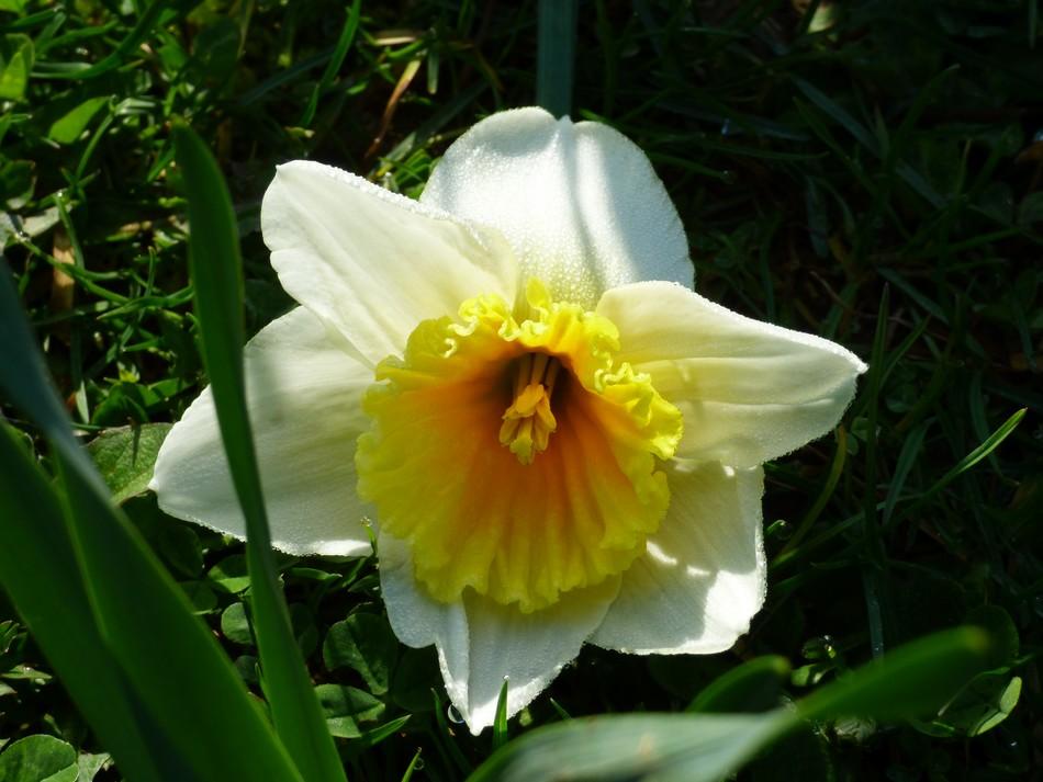 Fleurs-soleil pour oublier la pluie
