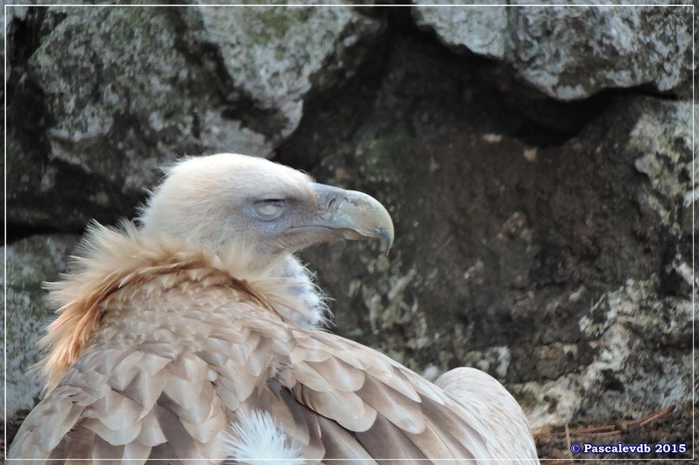 Zoo du Bassin d'Arcachon à La Teste - Août 2015 - 10/12