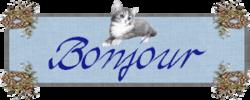 """Les """"malheurs"""" de mon chat !"""