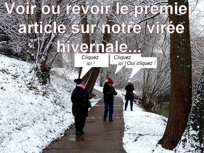 Metz / Divers gros plans d'hiver / Parc de la Seille...