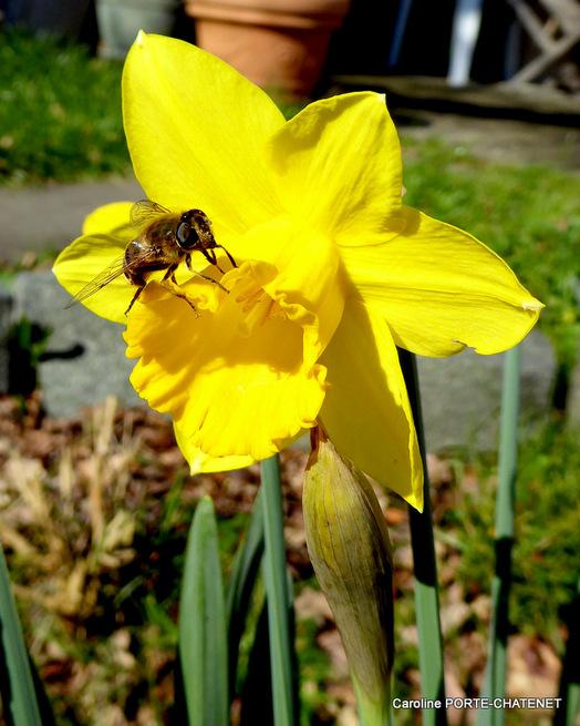 Premières fleurs dans mon jardin et à Mimizan