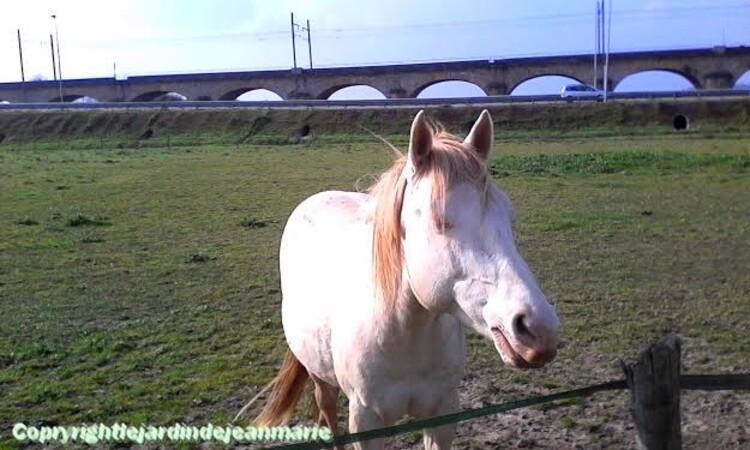 les chevaux au viaduc a Saint Macaire(Gironde) le chien de notre amie