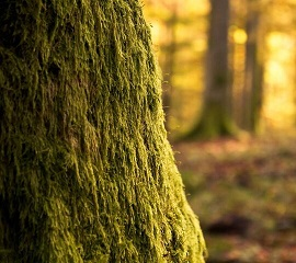 Le don de l'arbre ...