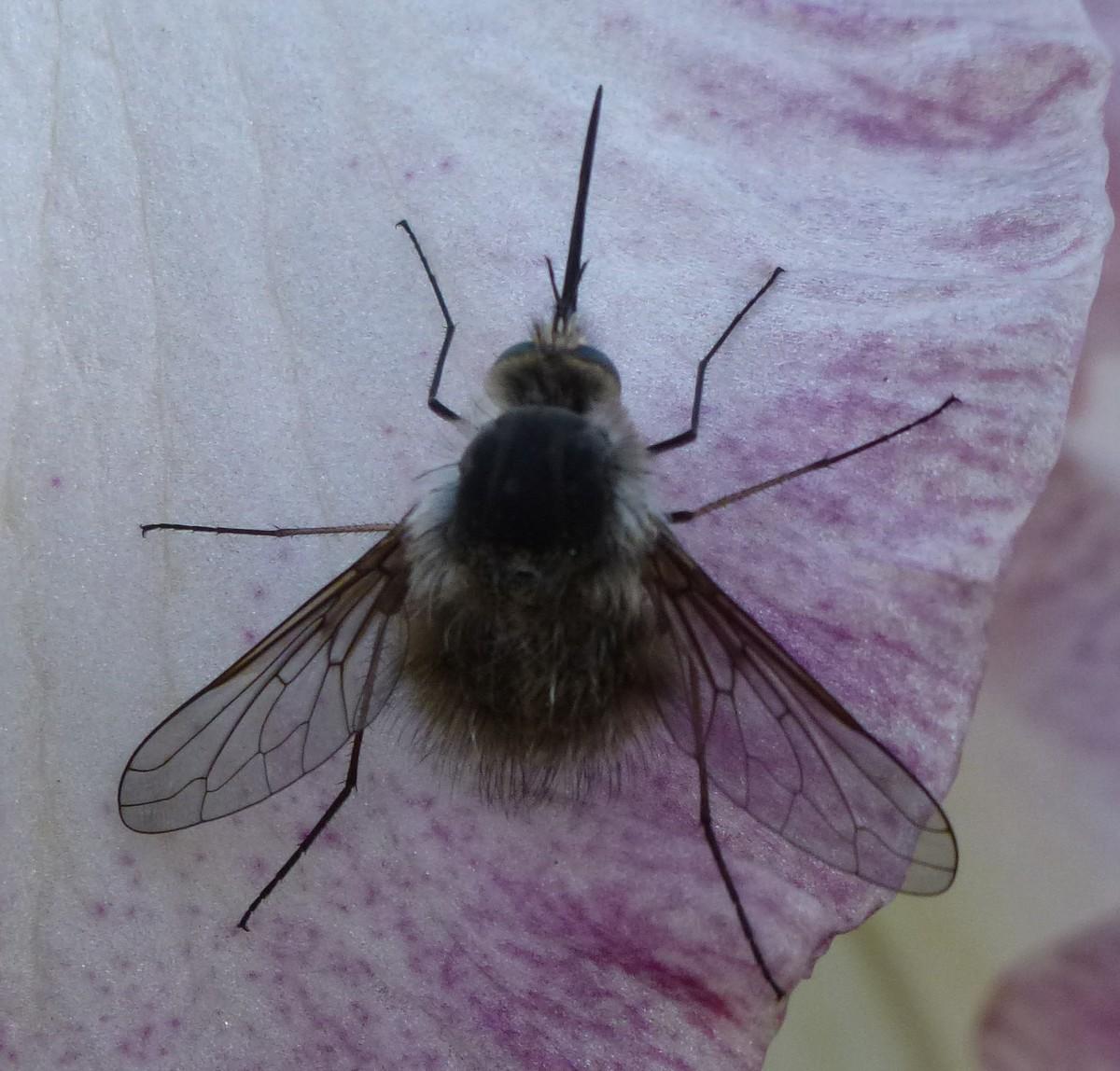 Insecte Salle De Bain Volant ~ photos et vid os d animaux insectes page 2 http