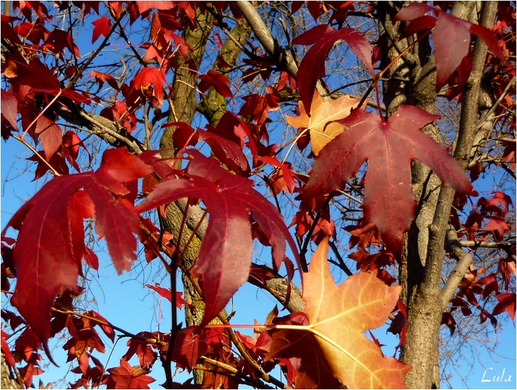 Arbres en automne (2011)