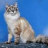 mimi-ces-petits-chats644876-l