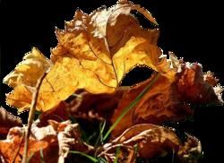 Branches avec feuilles sèches