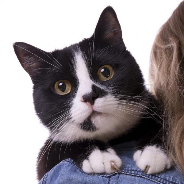 5choses que les chats détestent chez l'homme