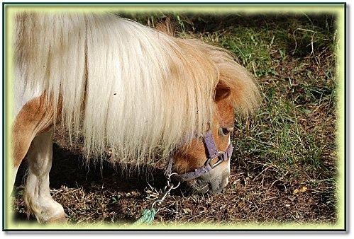 animaux-ferme-5.jpeg