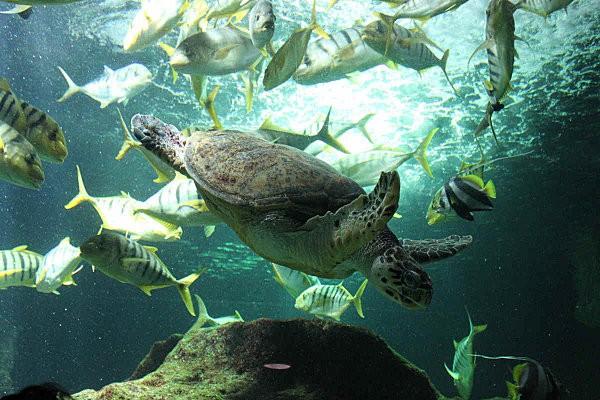 aquarium La Rochelle(17)