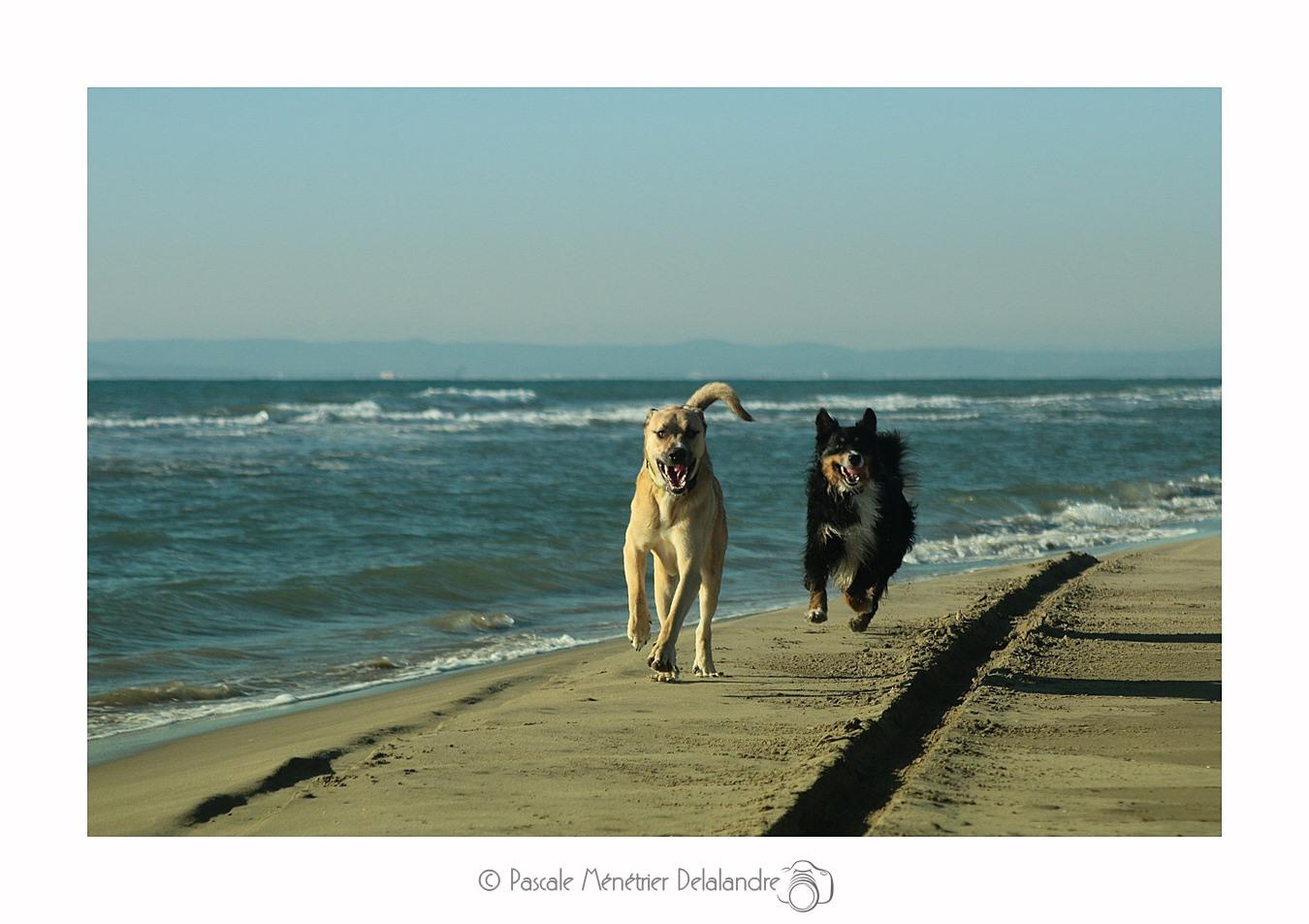 La première rencontre des quatre chiens sur la plage de l'Espiguette