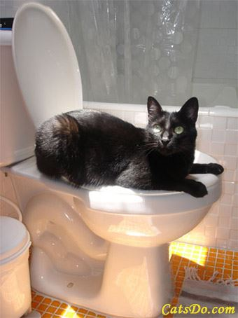 cocasse-chat-toilette.jpg