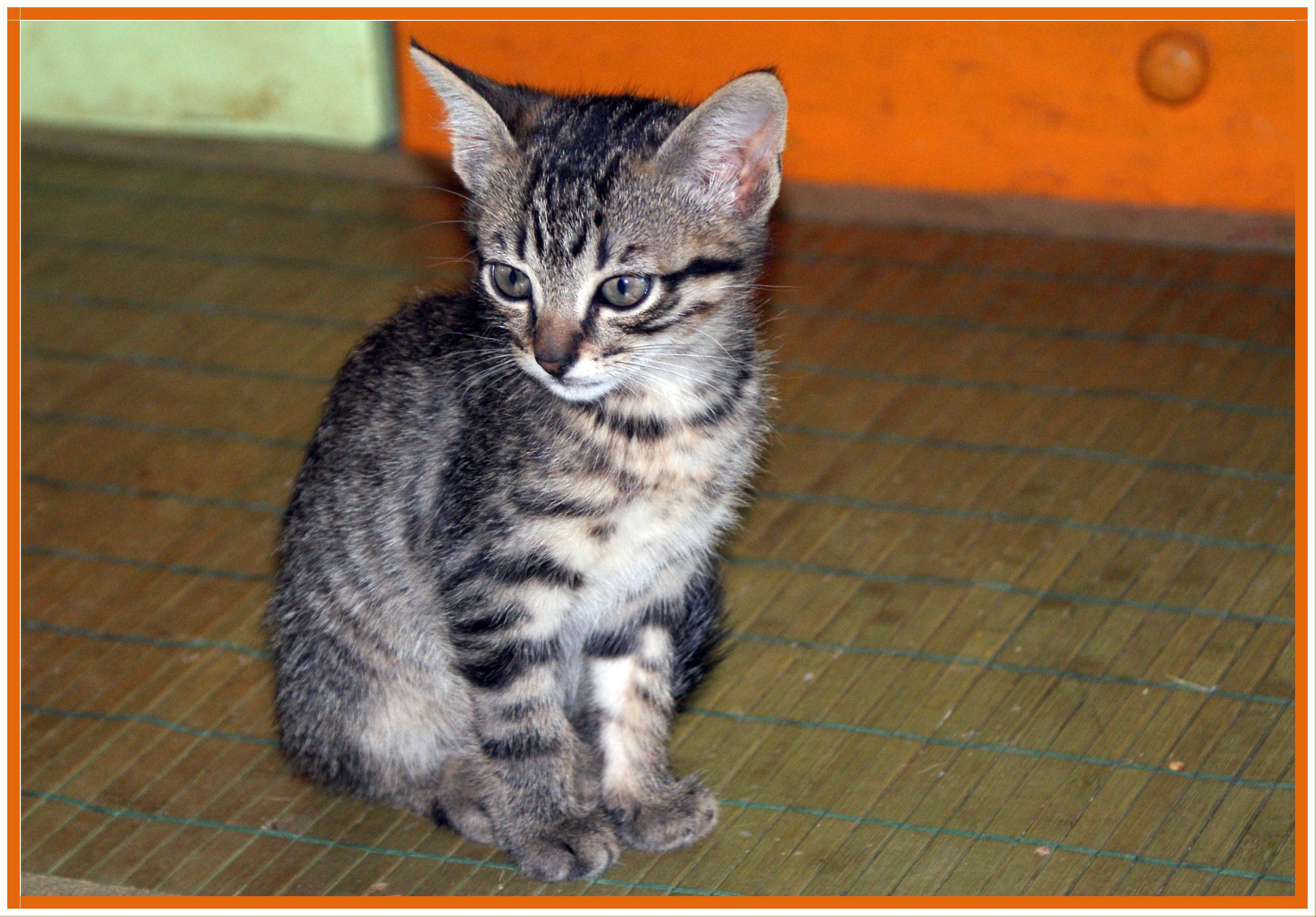 Masaï, mon petit chaton