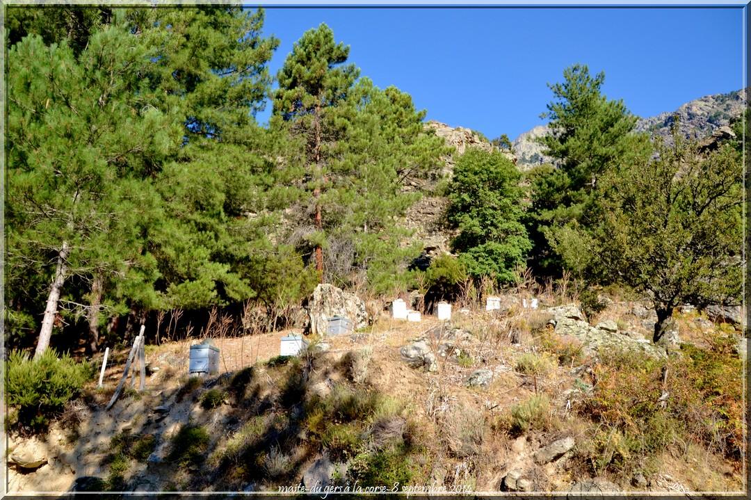 Pèle mèle - Ruches - Route d'Asco - Haute-Corse
