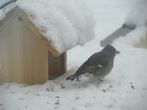 L'hiver à nos portes ( 3 )