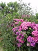 Retour au jardin d'Olga