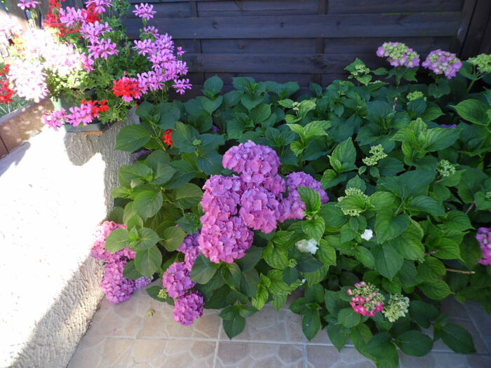 mes  fleurs et ma veranda