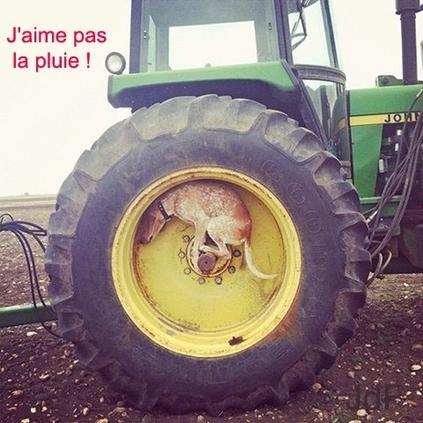 """Résultat de recherche d'images pour """"pluie humour"""""""