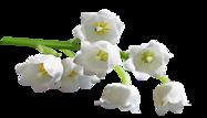 Spring Fiona