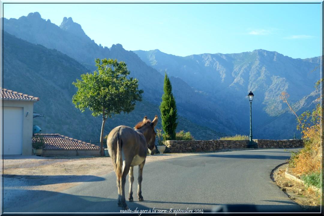 Pèle mèle -  Ane -Route d'Asco - Haute-Corse