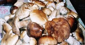 IMG champignon-copie-1