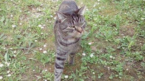 Voici le jardin confiné de mon  chat Titi