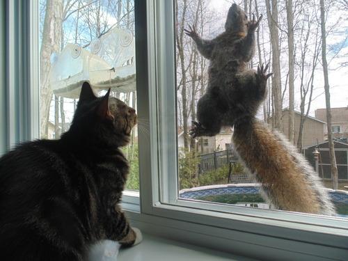 Pour ceux et celles qui aiment les écureuils