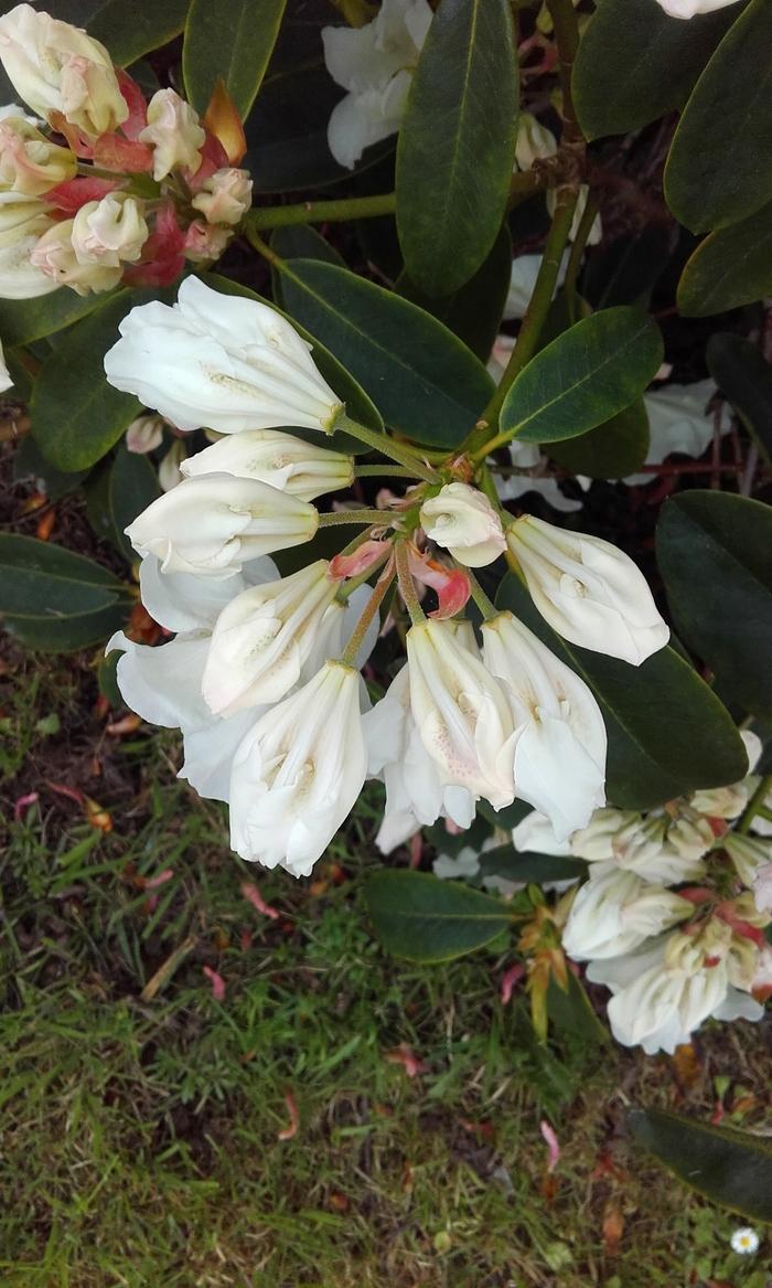 printemps fleuris