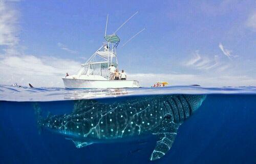 Le mystère du chant des baleines