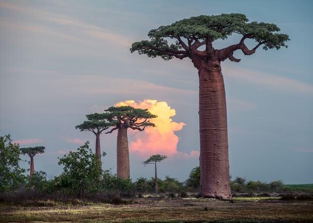 Madagascar, l'île exceptionnelle