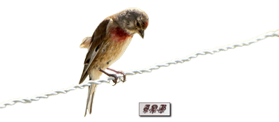 Tubes : Oiseaux