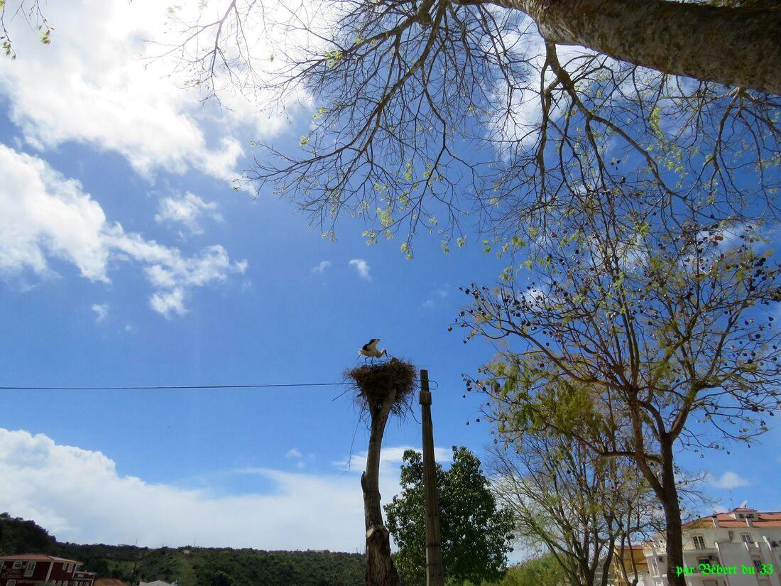 au Portugal il y a des cigognes !