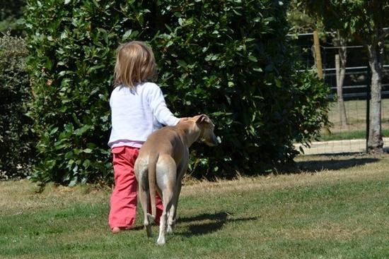 clémence promène son chien