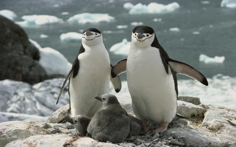 Photos sur les animaux:  20 photos