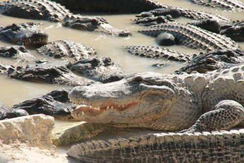 Everglades 2335