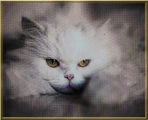 ♥ Nom d'un chat! ♥