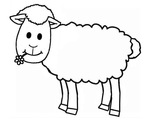 Du coton pour un mouton