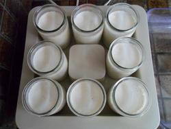 Des yaourts maison fermes