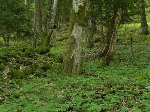 Promenons nous dans les bois, pendant que le loup y est pas...