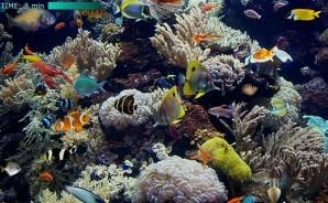 Hidden world - Underwater
